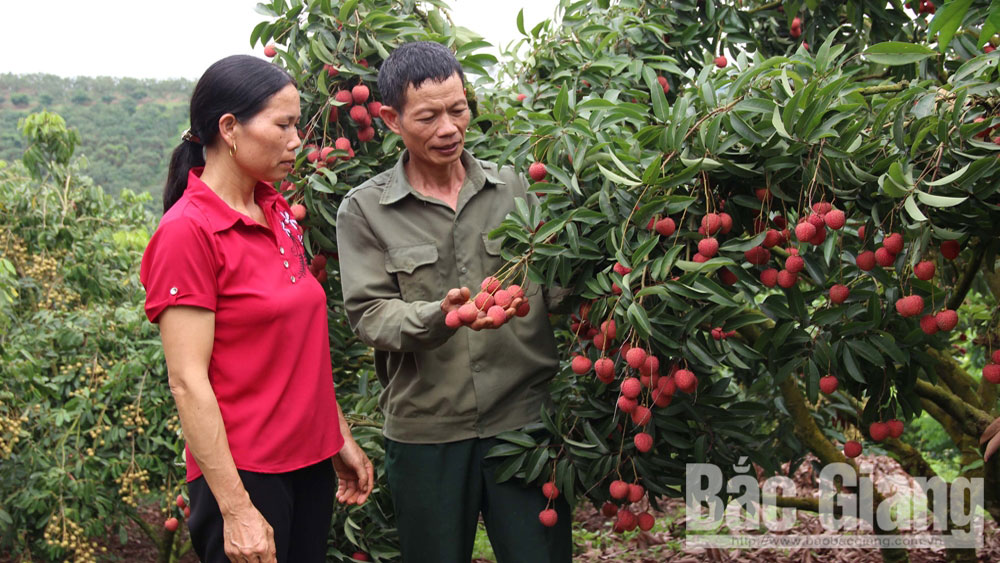 "Luc Ngan lychee and Yen The hill chicken honored as ""Vietnam golden agriculture brands 2019"""