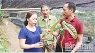 Nghiên cứu, bảo tồn giống trà hoa vàng trên địa bàn tỉnh Bắc Giang