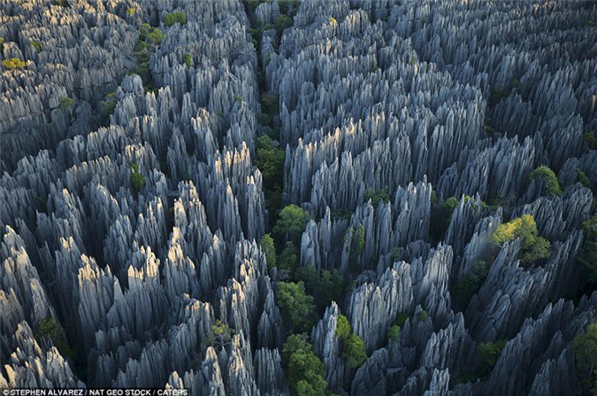 Rừng Tsingy, Madagascar, Rừng, Đen, Đức, Rừng Hallerbos, Bỉ, Rừng Rata, New Zealand