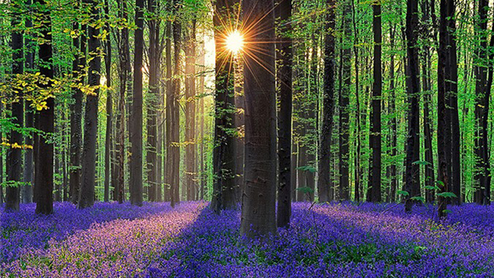 Khám phá những khu rừng có một không hai trên thế giới