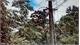 Giải cứu người đàn ông treo ngược trên đường dây điện