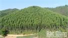 Yên Thế phát triển kinh tế mũi nhọn: Chăn nuôi gia cầm  kết hợp trồng rừng