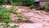 Clip: Đu ngọn cây, người đàn ông Thanh Hóa sống sót giữa dòng lũ cuồn cuộn