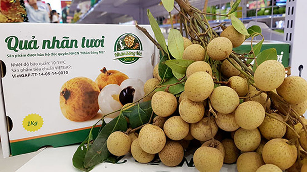 Son La province, locally-grown longan, Song Ma Longan Festival,  longan cultivation, foreign markets