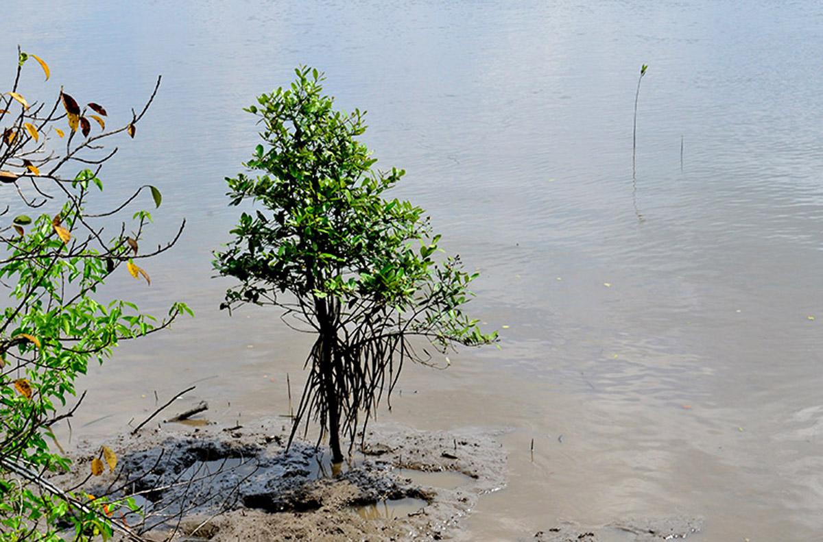 Khám phá, rừng ngập mặn Cần Giờ, đa dạng, độc đáo, đặc trưng