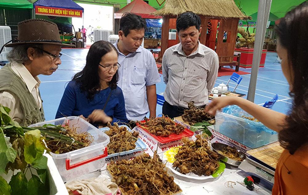 Quang Nam province, Ngoc Linh ginseng, Local farmers, Ngoc Linh Ginseng Festival 2019, medicinal herbs