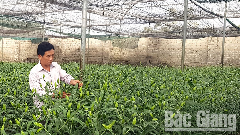 Bac Giang facilitates enterprises investing in agriculture and rural area