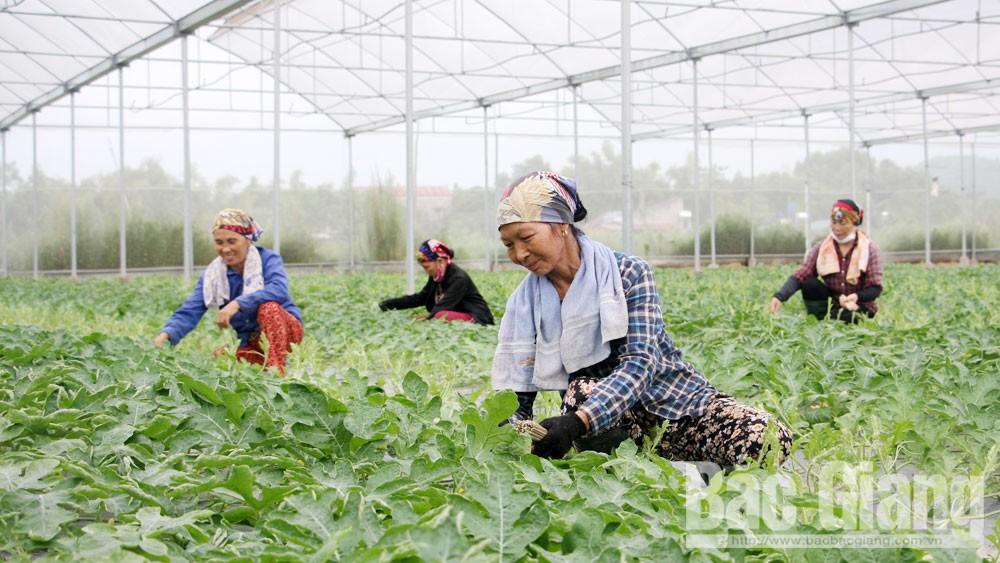 Việt Yên, Bắc Giang, liên kết sản xuất, cơ cấu ngành nông nghiệp, tiêu thụ, nâng cao giá trị nông sản