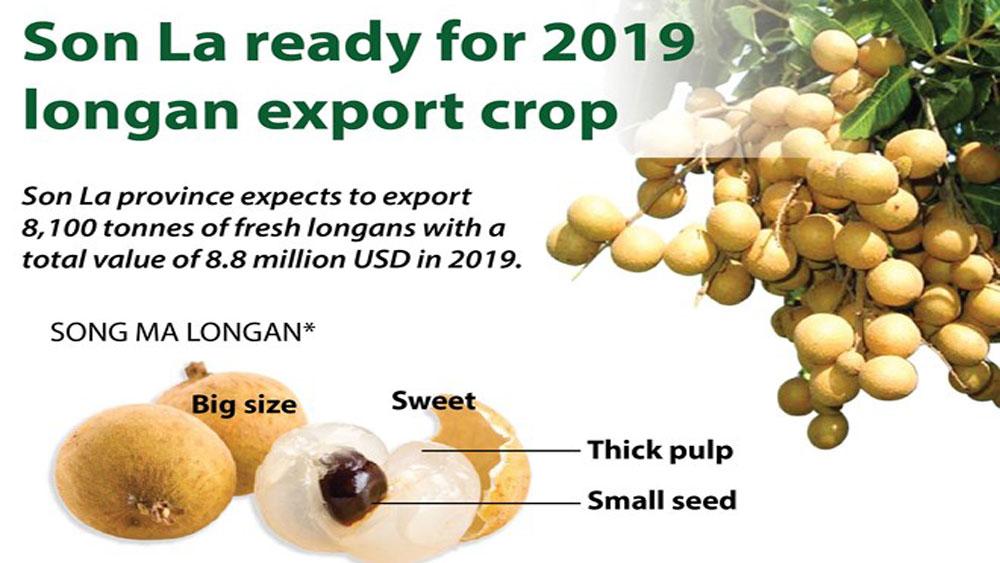 Son La ready for 2019 longan export crop