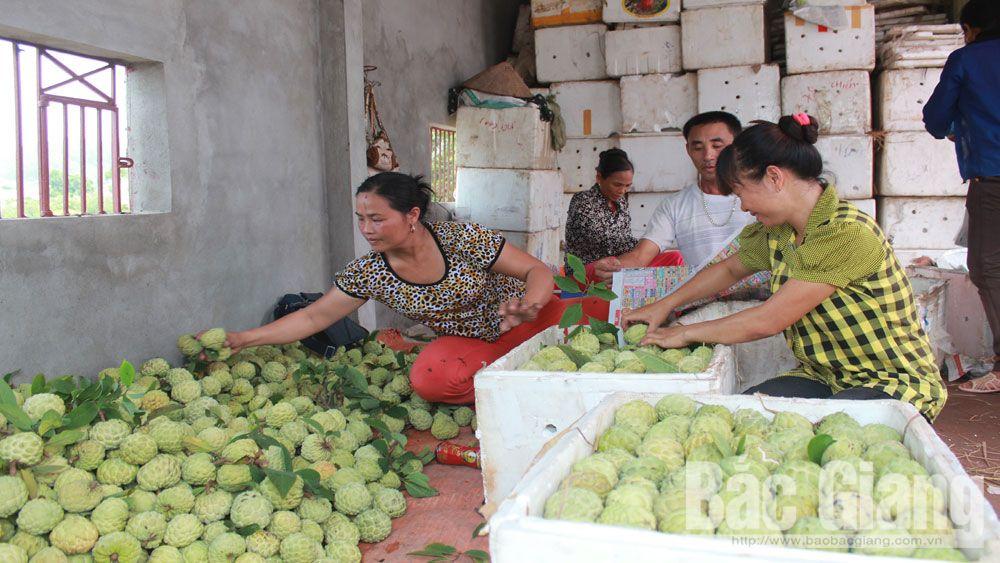 HTX, nông thôn mới, hợp tác xã, trồng trọt, chăn nuôi, Bắc Giang thương hiệu, nhãn hiệu
