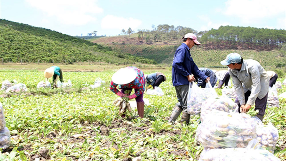Climate-change, adaptation models, peanut cultivation, goats and aquatic species, ineffective rice fields, cooperative team