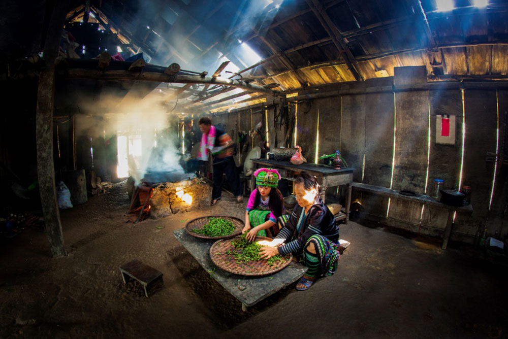 ancient Shan Tuyet tea, Vang A Khua, Mong ethnic minority group, Yen Bai province, traditional manual methods