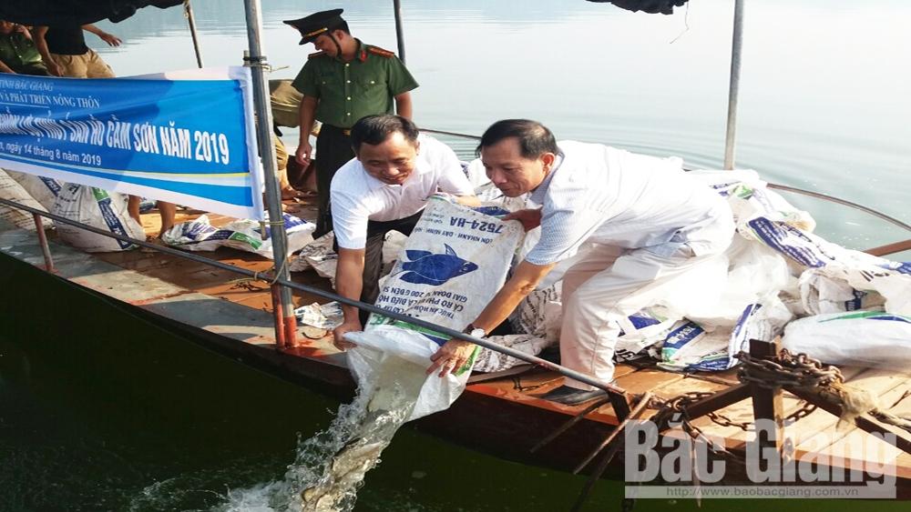 Thả hơn 2 tấn cá xuống hồ Cấm Sơn