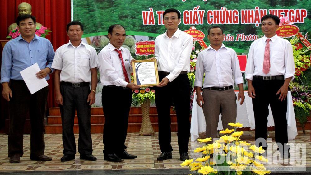Na dai Nghĩa Phương, Lục Nam. na Huyền Sơn, tây yên tử, VietGAP