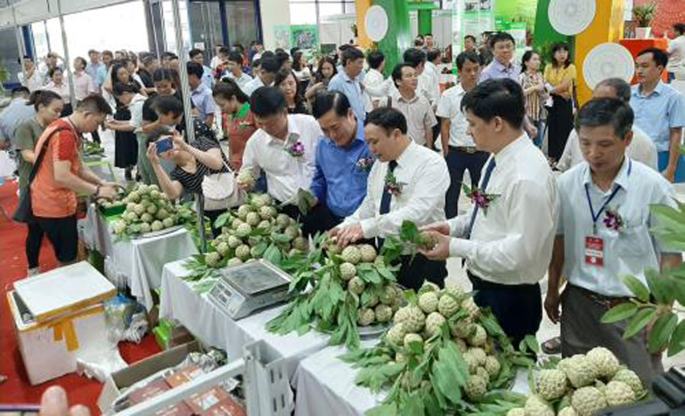 Lang Son province, custard apple, Hanoi, specialties of Lang Son, safe agricultural products, geographical indication registration