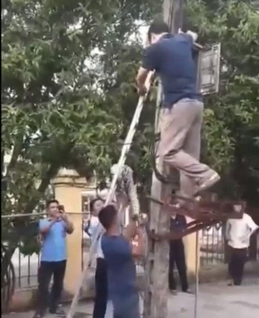 Trăn khủng, vắt vẻo trên cột điện ở Phú Thọ, người dân làm thịt
