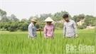 Những điển hình làm theo Bác ở Yên Thế (Bắc Giang)