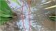 Thái Bình: Hàng xóm giăng điện bẫy chuột, một người tử vong