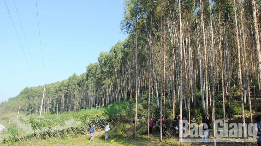 Bắc Giang, Xuất khẩu gỗ, trồng rừng, sản xuất, chế biến gỗ
