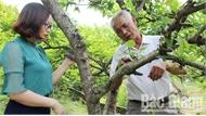 Bắc Giang ứng dụng khoa học kỹ thuật trong nông nghiệp: Tăng năng suất, giá trị nông sản