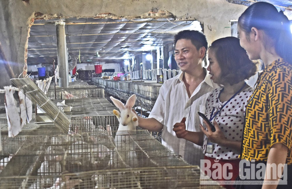 Anh Hoàng Văn Quyền giới thiệu mô hình nuôi thỏ.