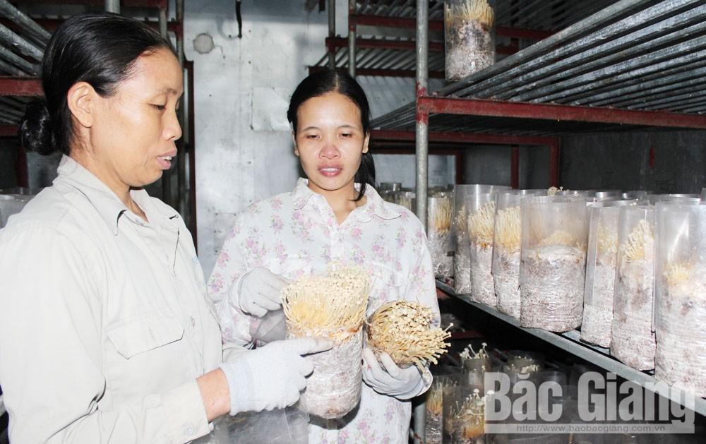 Bắc Giang, khoa học kỹ thuật, nông dân, mô hình sản xuất