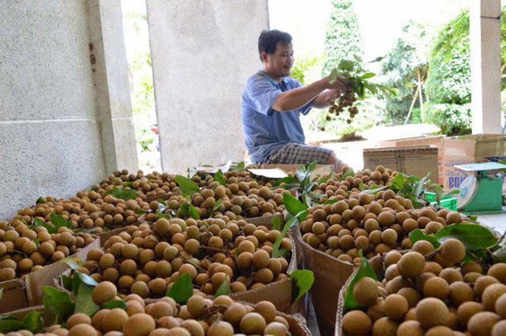 Vietnamese longan, Australia market, fresh longan, fourth fruit, valid import permit,  sufficient identification information
