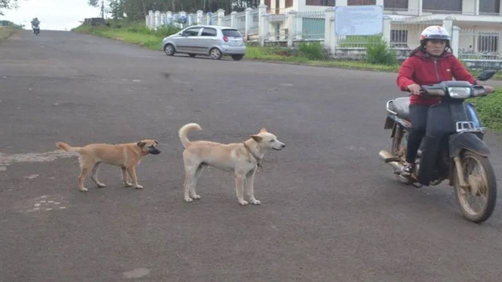 Ba trẻ nhỏ, bị chó dại cắn, đang chơi trong nhà
