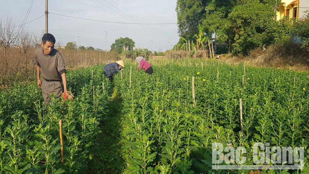 nông sản, bảo hộ nông sản, Bắc Giang, công nghệ cao, nông nghiệp