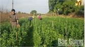 Nâng giá trị sản xuất nông nghiệp từ ứng dụng công nghệ cao