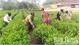 Sản xuất nông nghiệp hữu cơ - Hướng đi tất yếu