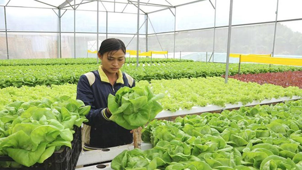 HCM City, Australia, high-tech agriculture, processing farm produce, bilateral cooperation, biological science research