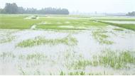 Đông Bắc Bộ có nơi nắng nóng, mưa lớn ở Trung Bộ giảm nhanh
