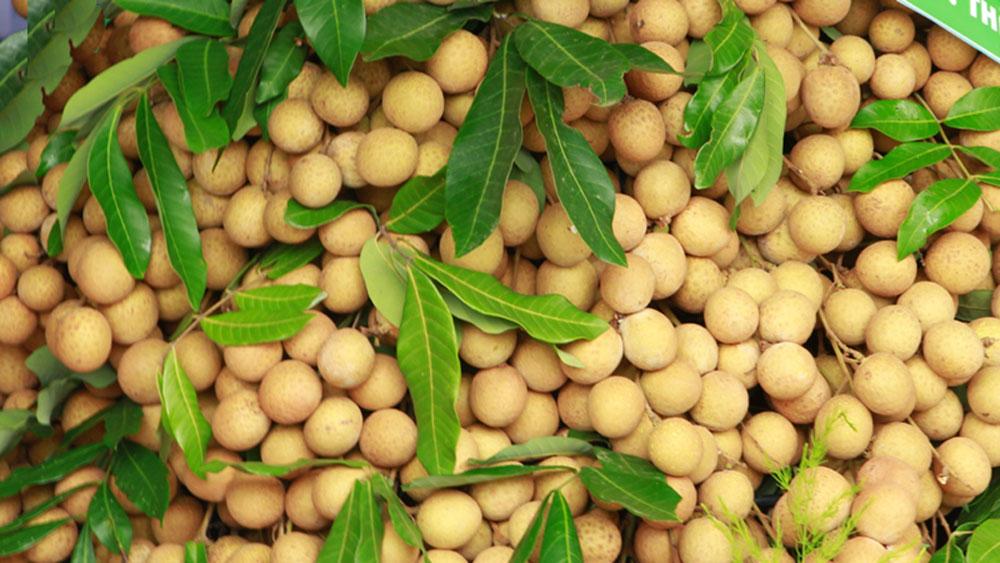 Lô nhãn tươi, đầu tiên, Việt Nam, nhập khẩu vào Australia, Giám đốc công ty Green Path,