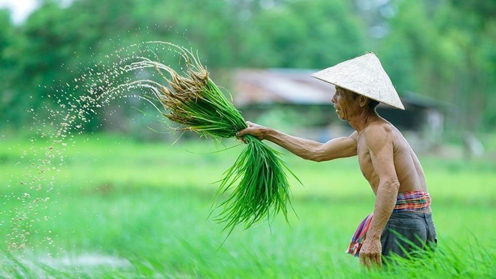 Vietnam, top 15, organic farming countries, agriculture ministry,  EU market, trade deals, animal husbandry, organic produce