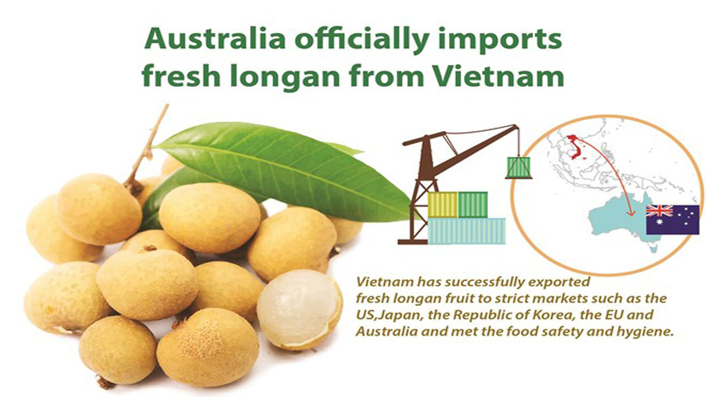 Australia officially imports fresh longan from Vietnam