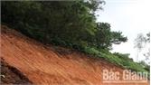 Hơn 30 ha rừng thông bị sâu róm gây hại