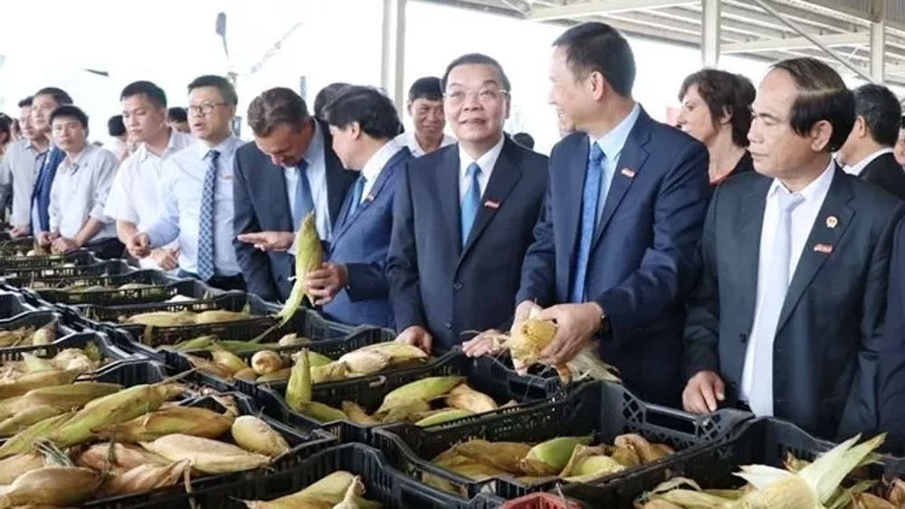 Central Highlands' largest fruit & veg processing centre inaugurated