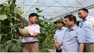 HTX nông nghiệp vẫn khó tiếp cận vốn vay