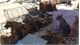 Thanh Hóa: Bắt giữ và triệu tập 30 nghi phạm trong đường dây trộm hàng trăm tấn chó