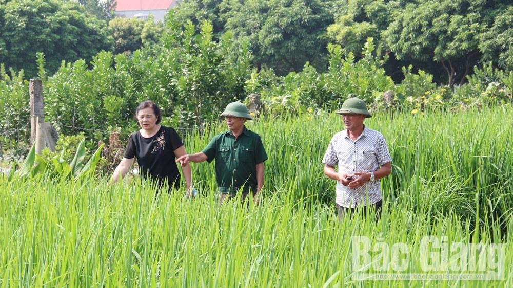 Lạng Giang, Bắc Giang, thôn nông thôn mới, diện mạo mới, làng quê