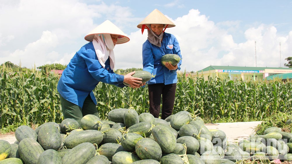 Bac Giang province, intensive farming areas, enterprise involvement, agriculture development strategy, high economic value, production infrastructure