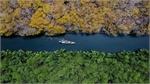 Autumn yellows return to Ru Cha mangrove forest