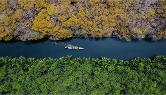 Autumn yellows return to Ru Cha mangrove forest