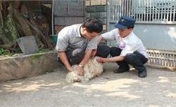 Thêm 1 trường hợp tử vong do bệnh dại tại Đắk Lắk