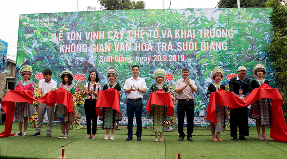 Ancient tea tree, Yen Bai province, Muong Lo Culture and Tourism Week, shan tuyet tea, domestic and foreign markets, Suoi Giang tea space