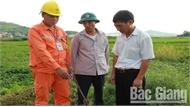 Xử lý tình trạng dùng điện bẫy chuột ở Lục Nam