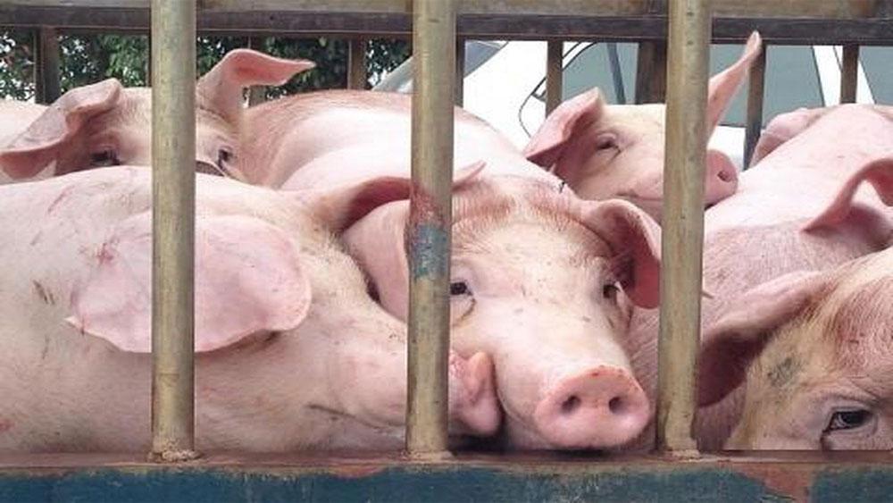 Hàn Quốc, nỗ lực ngăn chặn, dịch tả lợn châu Phi lây lan