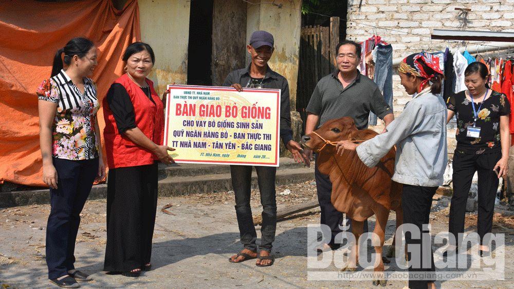 Tân Yên tặng bò giống cho hộ nghèo