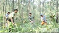 Phòng, chống cháy rừng mùa hanh khô: Nêu cao trách nhiệm chủ rừng